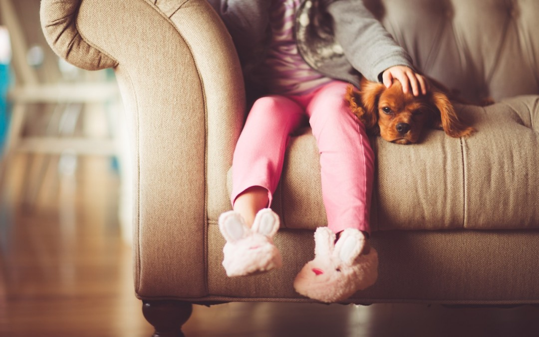 Mascotas y tarima o parquet: cómo convivir con mascotas y tarima o parquet en casa