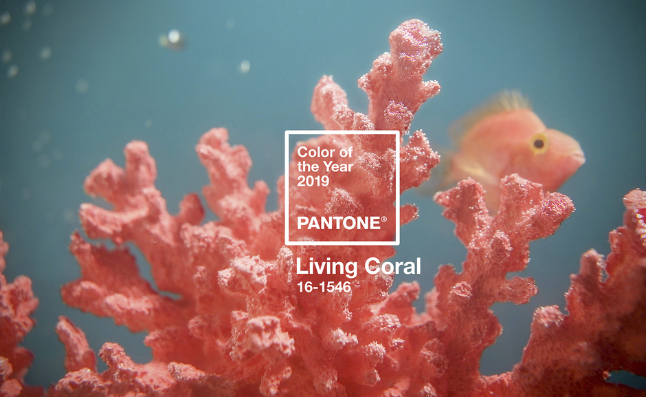 Living Coral, Color Pantone del año 2019